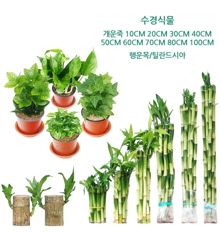 다양한 식물 모음전