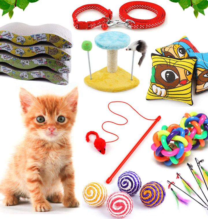 고양이 용품 백화점