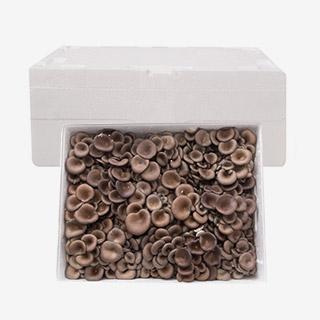 [대용량] 꽃느타리 2kg x 1박스